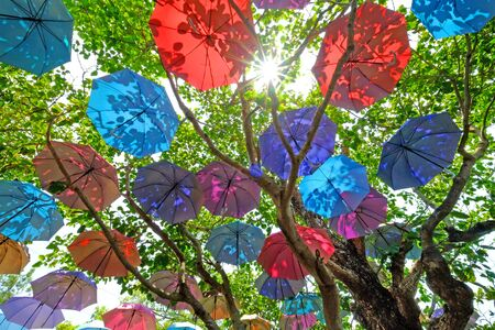 Opening colorful umbrellas hanging under big green tree outdoors Stock Photo