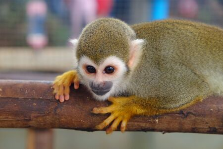 Adorable little monkey holding a lumber