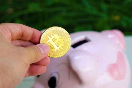 Closeup man's hand holding golden bitcoin coin for saving into piggy bank Foto de archivo