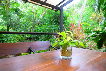 Fresh small green leafs plant in transparent vase on wood table in forest