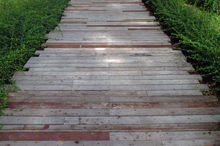 Perspective straight view of timber walkway through green fresh garden