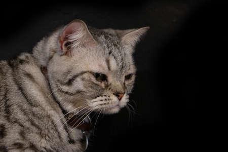 Cat with innocent face on black background Foto de archivo