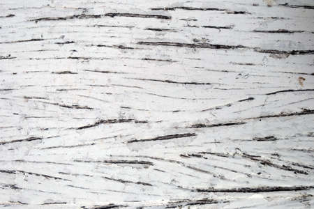 Pattern of natural surface of old white lumber Foto de archivo