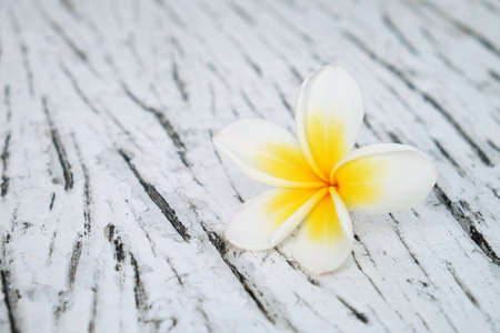 Fresh Frangipani flower, Plumeria species, on white wood surface table