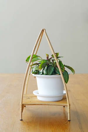 Fresh small green plant in white flowerpot for decoration on wood table