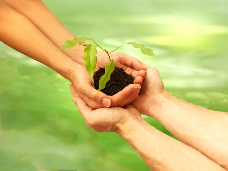 land plant: Conceptual photo of a man and a woman holding a young plant on green background Stock Photo