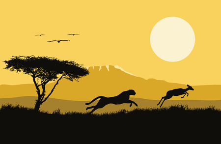 cheetah: Vector illustration of africa.