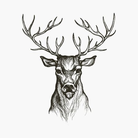 Hand Drawn Deer. Deer illustration. Hand drawn animal