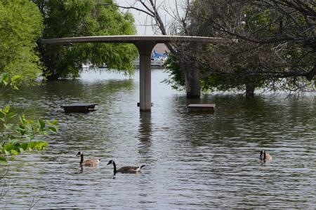 overstroomd park