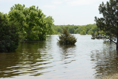 chatfield: trees under water Stock Photo