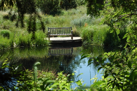 bench by calm pond