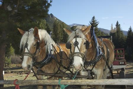 span paarden