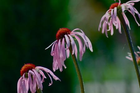 diagonal: diagonal line of flowers