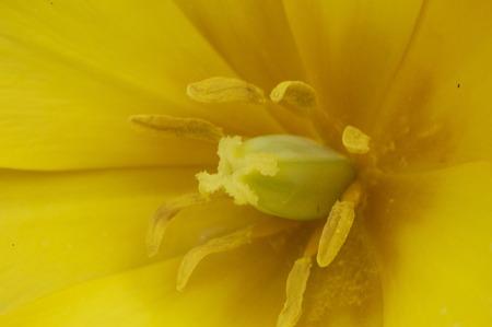 macro: yellow flower macro shot Stock Photo