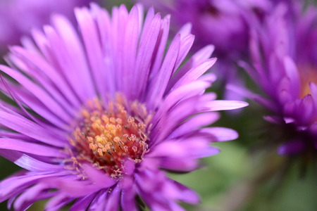 macro of purple flowers