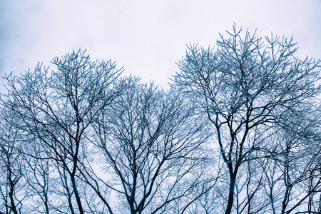 could: Ice trees on could winter day Stock Photo