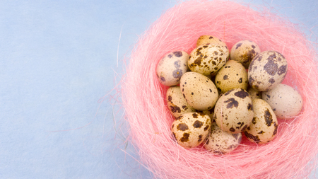 Quail eggs in a green nest rotating on a pastel blue background. Close up.