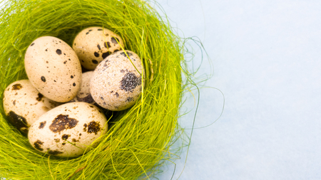 Quail eggs in a green nest on a pastel blue background. Close up.