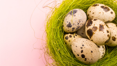 Quail eggs in a green nest on a pastel pink background. Close up. Stok Fotoğraf
