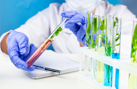 Scientist hold test tube with plant inside in laboratory.