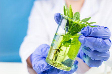 Scientist holds a flask with plant and fluid in his hands