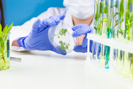 Scientist hold petri dish with plant in laboratory.