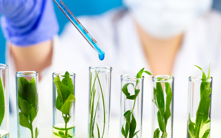 Scientist hold pipette with blue liquid water drop in test tubes with green fresh plant.
