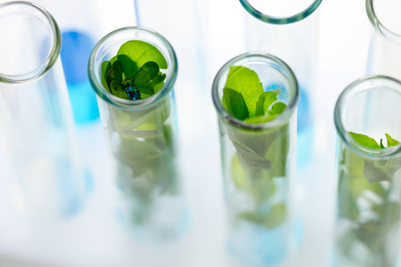 Green fresh plant in test tube with blue water in laboratory.