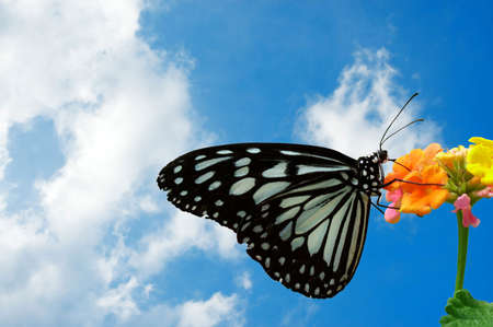 Butterfly perched on a flower with a puffy white cloud background.