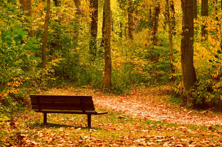 A park bench on a trail invites you to take  a moment to enjoy your surroundings. Just the start of the fall color change. Stock Photo