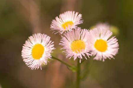 아주 작은 야생 꽃의 매크로 사진입니다. 필드의 얕은 깊이.