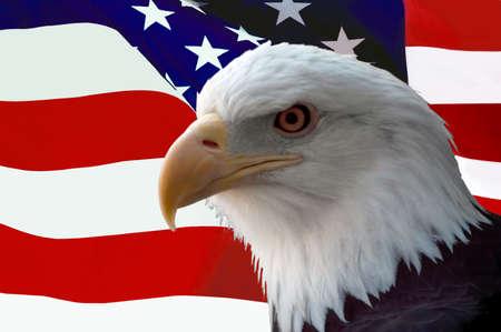 aguila calva: El ave nacional de los Estados Unidos de Am�rica, la majestuosa �guila calva en contra de una bandera de fondo. Gran imagen patri�tica.  Foto de archivo
