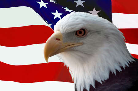 american eagle: The national bird of the United States Of America, the majestic bald eagle against a Flag background. Great patriotic image. Stock Photo