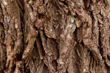 Close-up of some very craggy and rough tree bark texture.