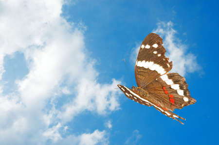 Beautiful butterfly flying off into a puffy white cloud background.