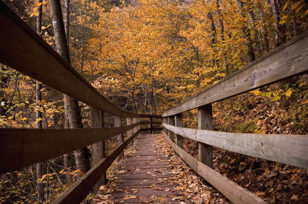boardwalk trail: A boardwalk on a forest trail makes for an inviting image bringing you into a beautiful autumn forest. Stock Photo