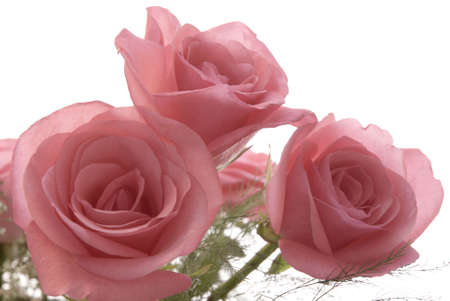 A bouquet of fresh pink roses isolated against a white background.