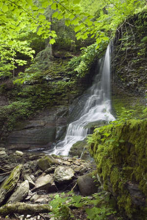 mosses: A beautiful lush green grotto waterfall. Spring colors add to the beauty of the scene.  This shaded setting is constantly moist and damp and is perfect for green mosses, lichens and ferns to grow in. Its called Bucktail Falls and is rural central New York