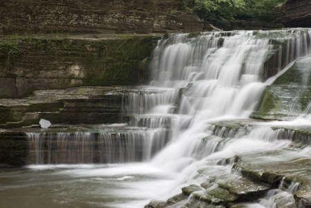 enfield: Una cascata di bella 20 piedi nel Parco statale di Robert Treman, New York. Muschi e licheni sulle rocce lungo il torrente, felci aggiungono alla bellezza della scena.