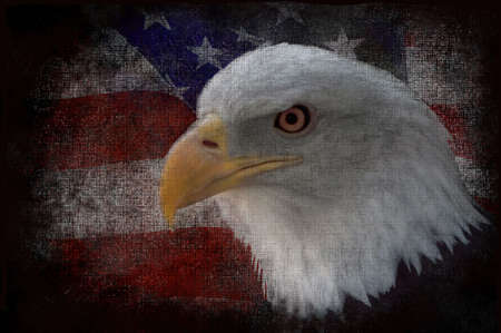 The national bird of the United States Of America, the majestic bald eagle against a Flag background. Great patriotic image. Stock Photo