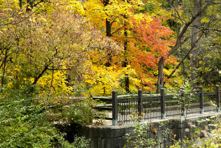 Beautiful red,orange and yellows colors of autumn along the old Erie Canal in Toledo Ohio  photo