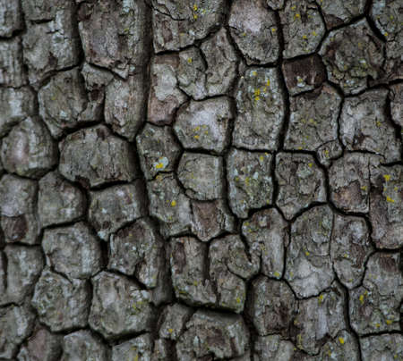 Close up of an interesting tree bark texture pattern