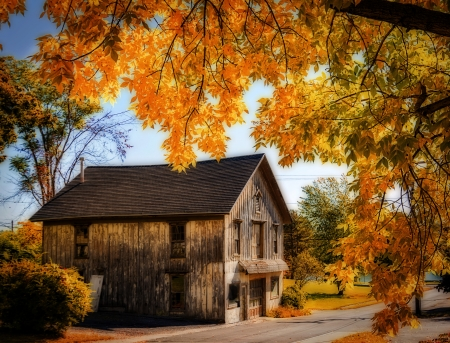 Photo of an old rustic barn framed by a tree with colorful orange and yellow leaves of fall. Photo has been given a photoshop effect to make it look like a watercolor painting.