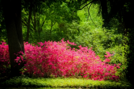 Beautiful manicured garden with blooming azalea bushes with oil painting effect