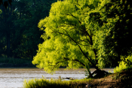 A beautiful tree along a river bank on a warm summer day.