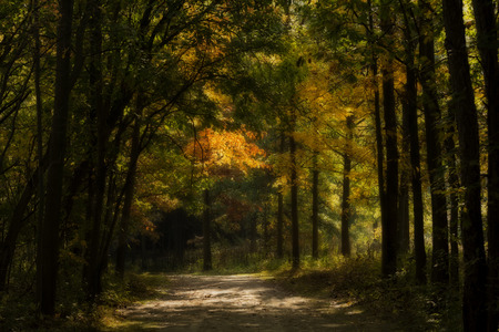 A beatiful  autumn forest scene with vibrant tones of yellow, oranges and greens in the trees. A dirt path leads you into the scene.