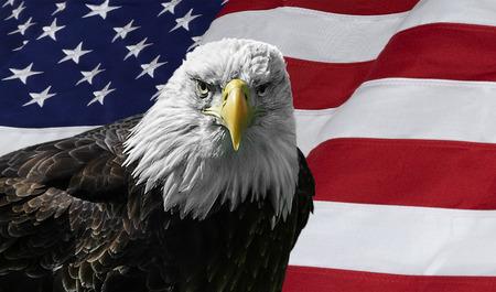 アメリカ国旗に対して雄大な白頭鷲の写真。