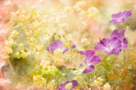 Photo of purple flowers in a summer garden with artistic texturing applied. Stock fotó