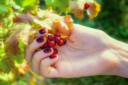 Red berries in the girls hand Stock Photo