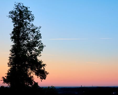 Sunset silhouette of the big birch tree towering above the town, beautiful pink and blue sky background with an airplane trails Standard-Bild